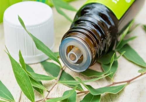 Bài thuốc nam chữa hôi miệng bằng thảo dược trong dân gian
