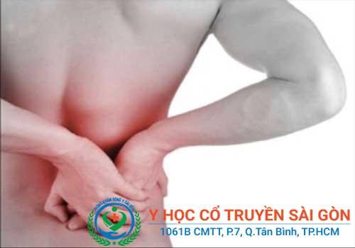 Bài thuốc nam chữa bệnh đau lưng hiệu quả trong dân gian
