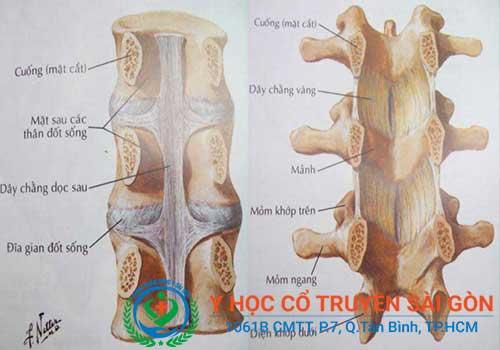 Bài thuốc nam chữa bệnh vôi cột sống trong dân gian