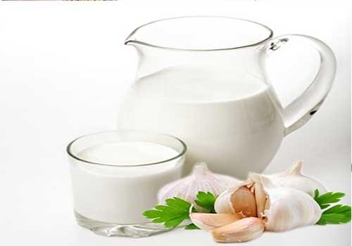 Chữa đau thần kinh tọa bằng sữa tỏi nóng
