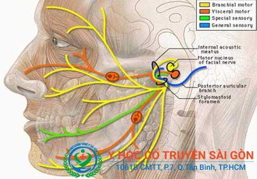 Có thể bị viêm dây thần kinh ngoại biên hoặc vận động