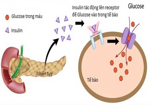 Bệnh tiểu đường là gì?nguyên nhân, triệu chứng, biểu hiện