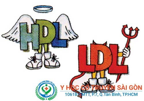 Rối loạn Lipid máu được xác định dựa trên nồng độ HDL và LDL trong máu