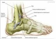 Bài Thuốc Nam chữa bệnh thoái hóa khớp cổ chân trong dân gian