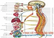 Bài Thuốc nam chữa viêm dây thần kinh tại YHCT Sài Gòn